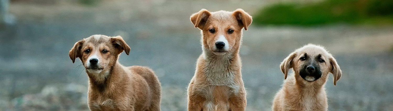 Die besten Hundeduschen